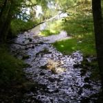 Klusā daba